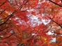 2014-11-23_11.07.45_X30