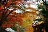 2014-11-23_11.07.55_DSC-RX100M3