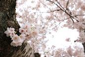 2016-04-02_133018-_Canon EOS 7D Mark II-7D2_9902_s